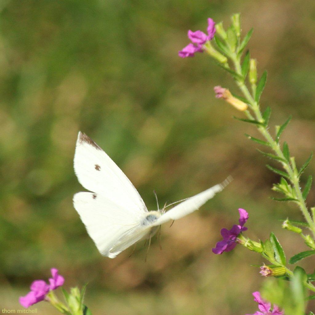 Captured in flight by rhoing