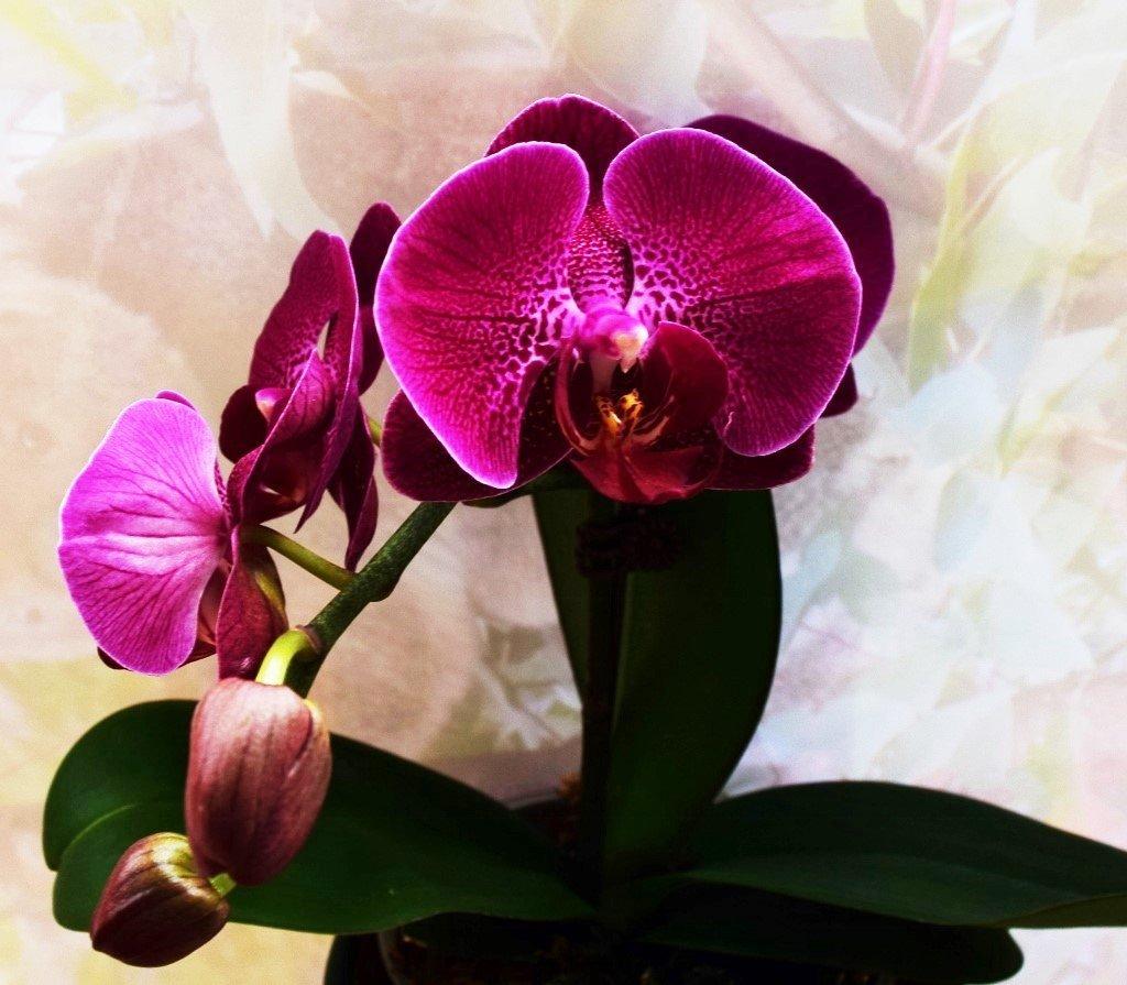 First Flower ~ by happysnaps