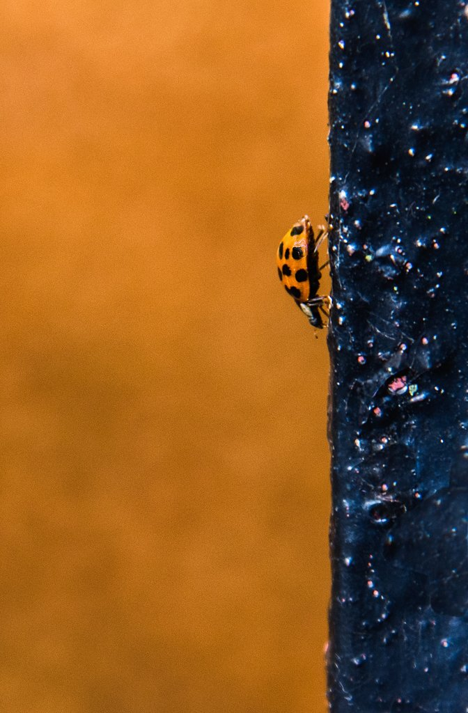 Invasion of the ladybirds by inthecloud5