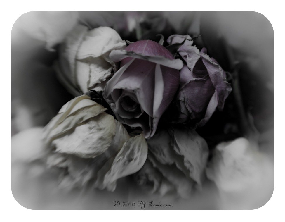 Faded Beauty by bluemoon