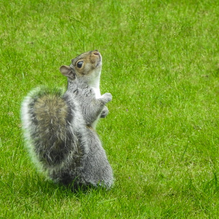 Strictly squirrel by inthecloud5