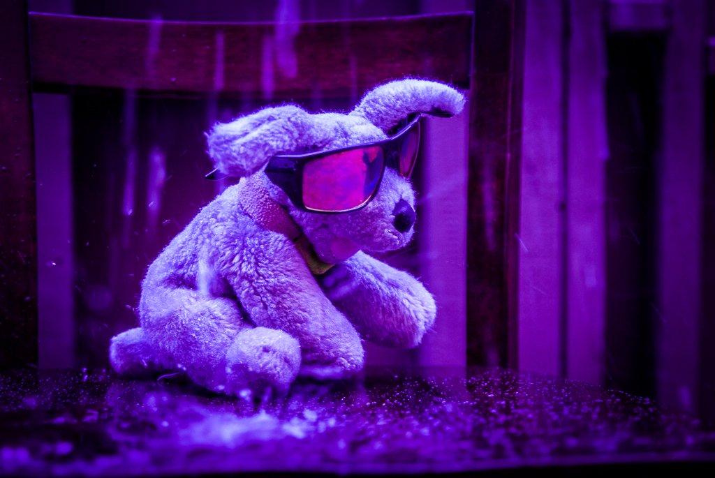 (Day 275) - Purple Rain by cjphoto