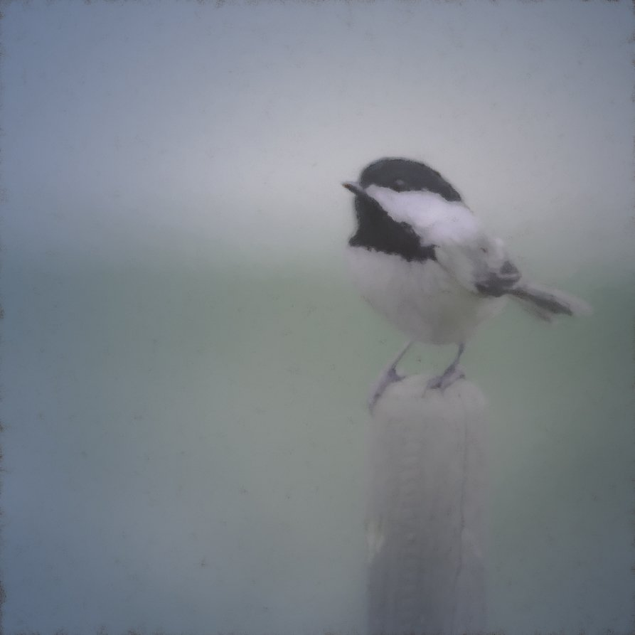 black capped chickadee by jackies365