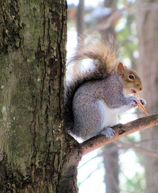Squirrely guy. by maggie2