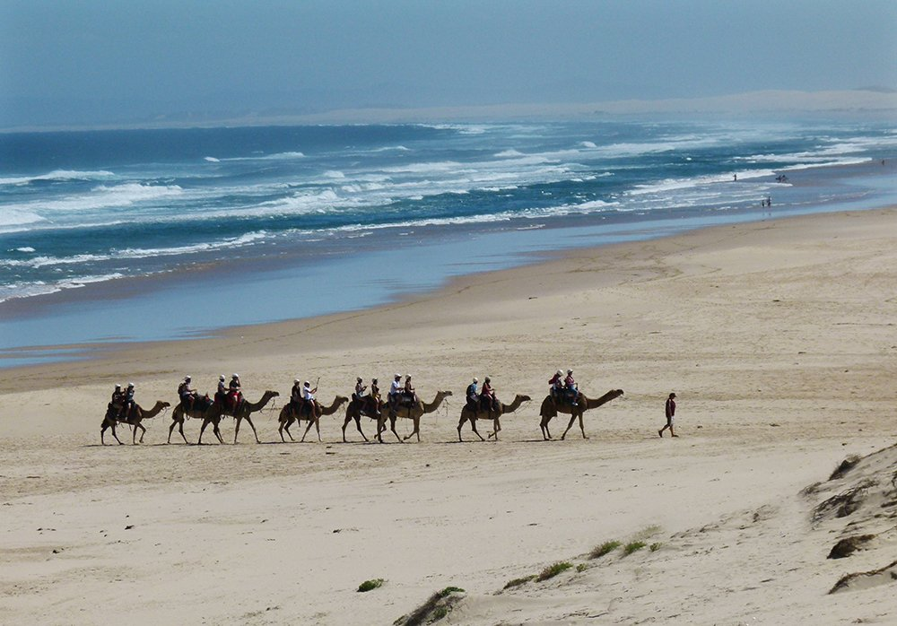 Camel Train by onewing