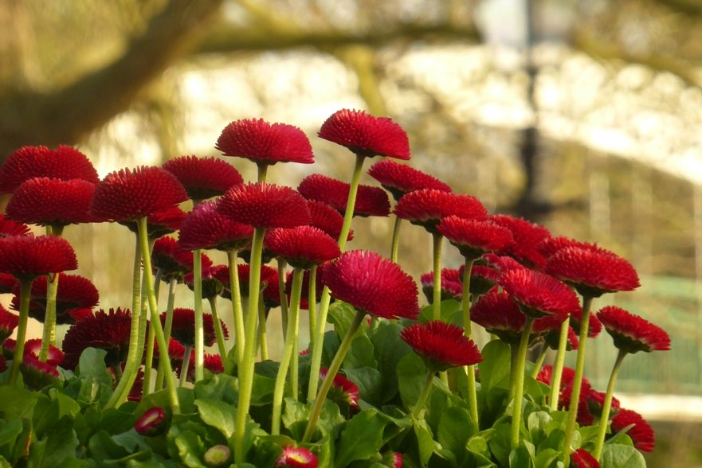 Seeking Red by helenhall