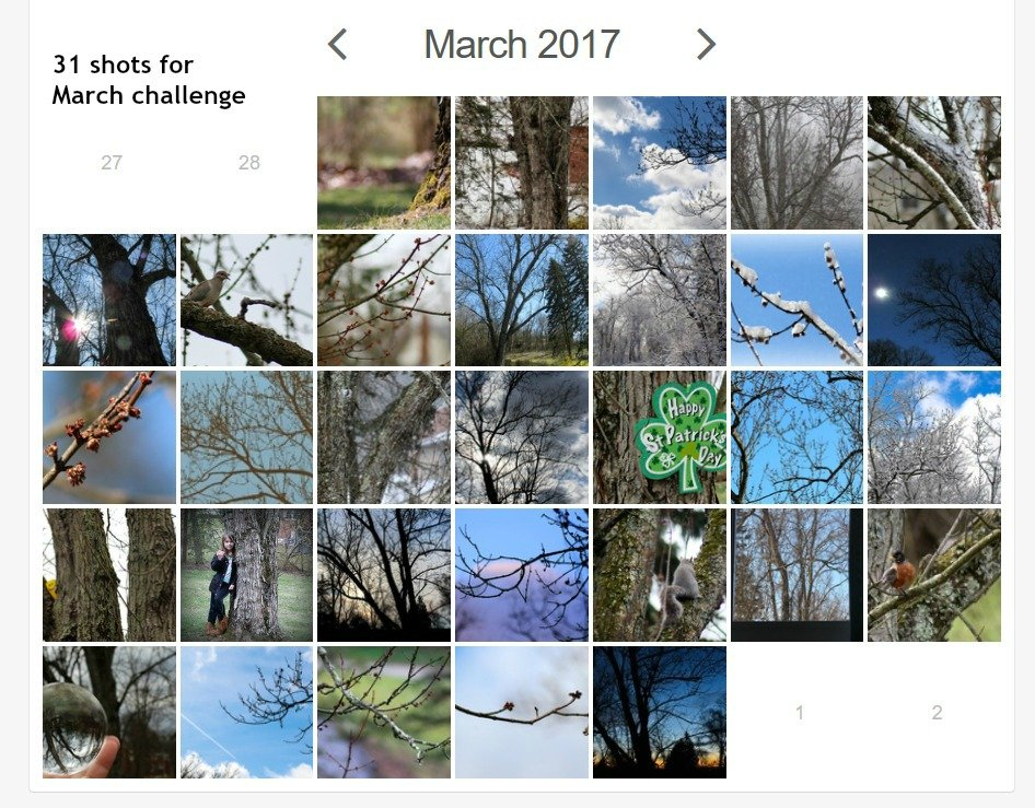 My 31 shots for March collage by mittens