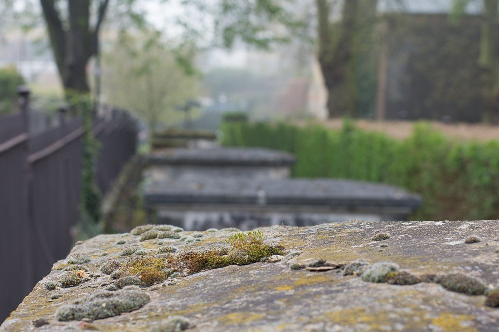 Moss on stone by helenm2016