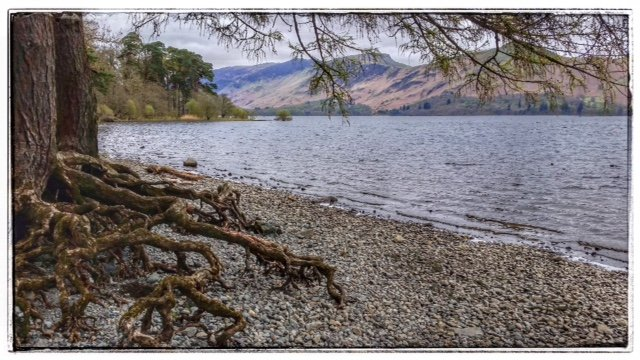 Coniston Water - loved the tree roots! by lyndamcg
