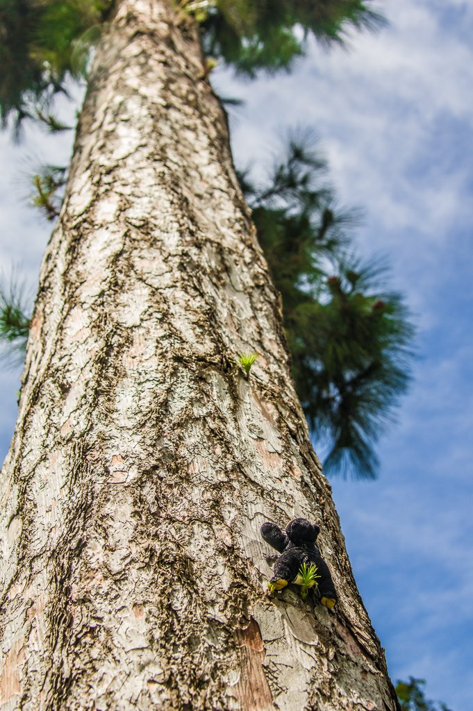 (Day 67) - The Climb by cjphoto