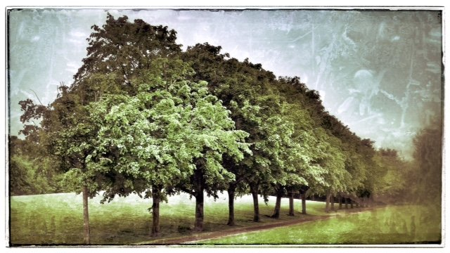 Some trees on our stroll given a grunge effect! by lyndamcg