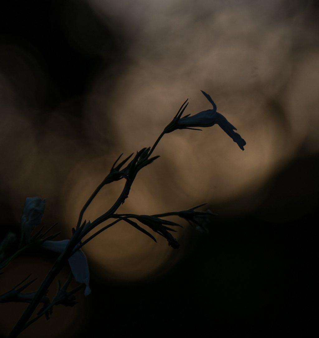 Sunset bokeh by randystreat
