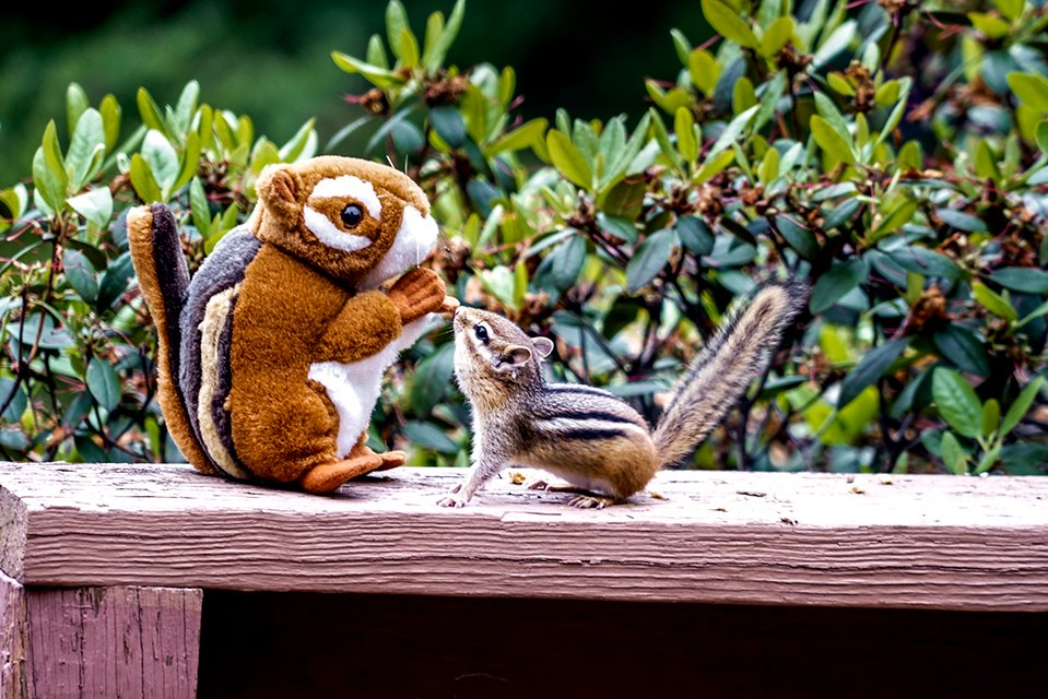 Chipmunk Decoy (aka: Lord of the Chippies!) by Weezilou