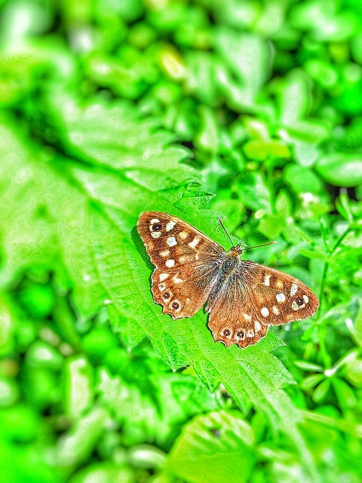 Butterfly on the nettles  by angiedanielle24