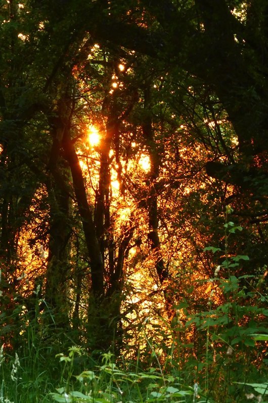 Gold and Green at the end of the day by helenhall