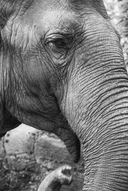 Elephant by leonbuys83