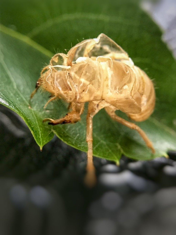 Cicada by joemuli