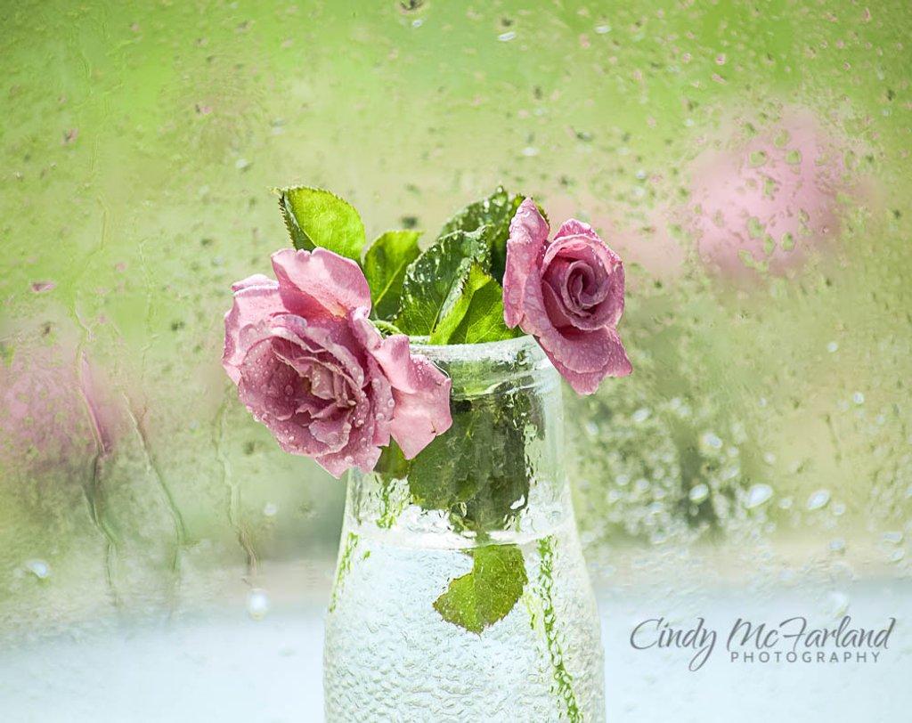 Rainy days and Mondays always get me down.... by cindymc