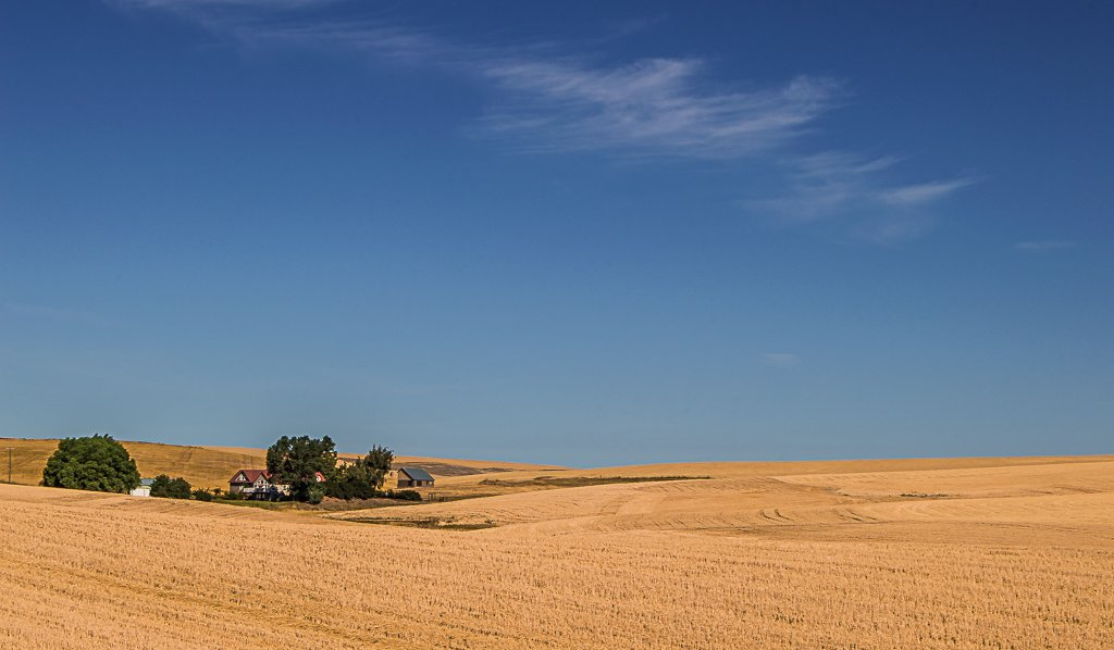Palouse Wheat Fields by 365karly1