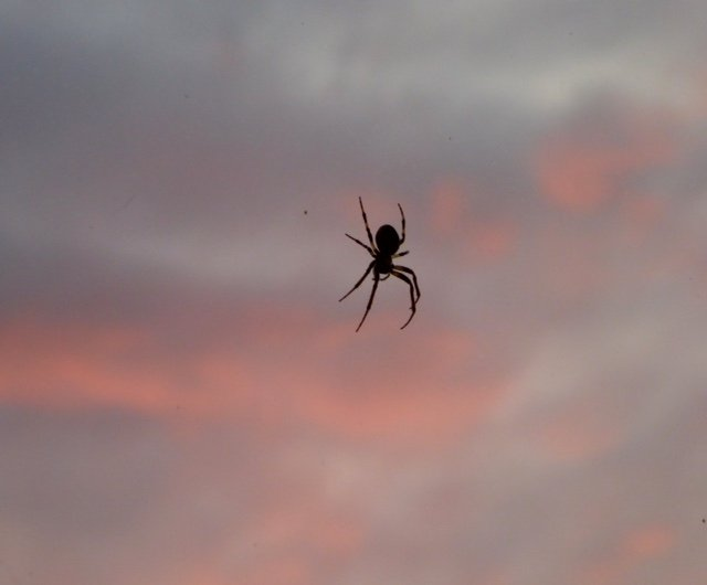 Spider in the sky! by chris17