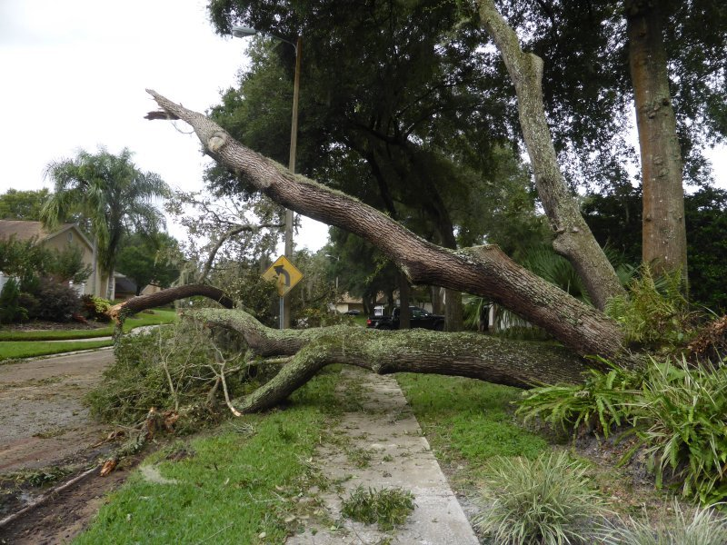 Irma Aftermath - Tree Down by mimiducky