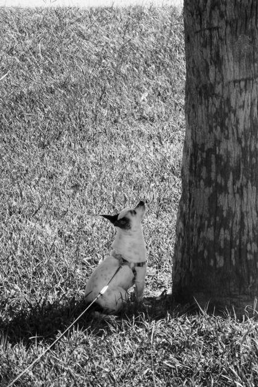 Barking UP on the wrong tree by joemuli