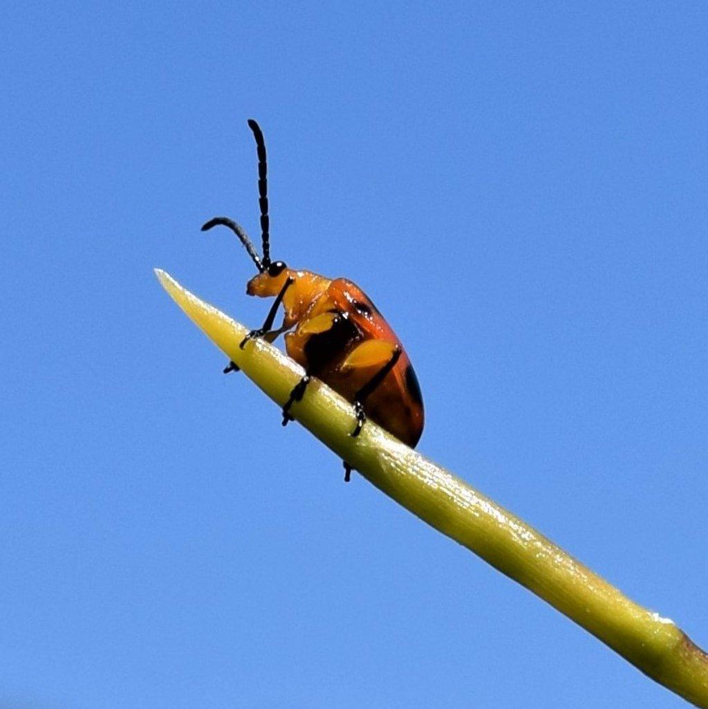 Bright Bug ~ by happysnaps