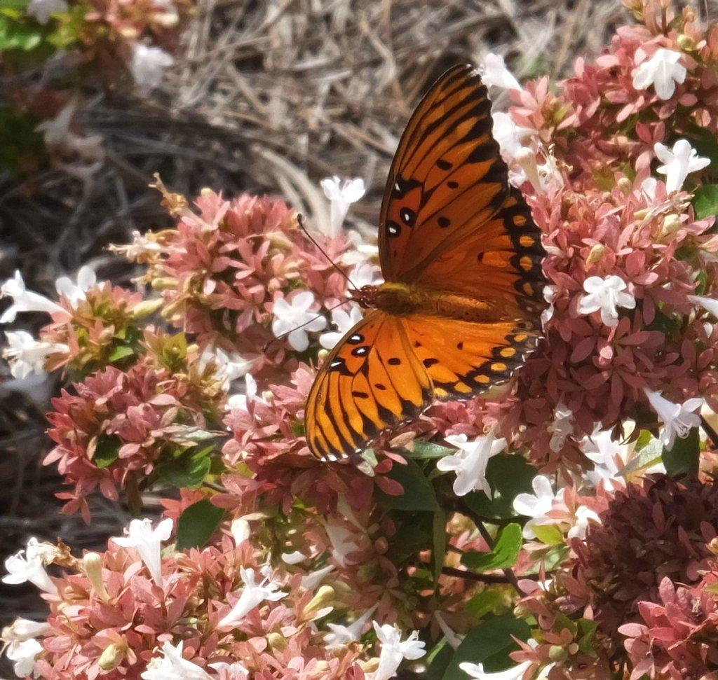 The Butterfly Garden by linnypinny
