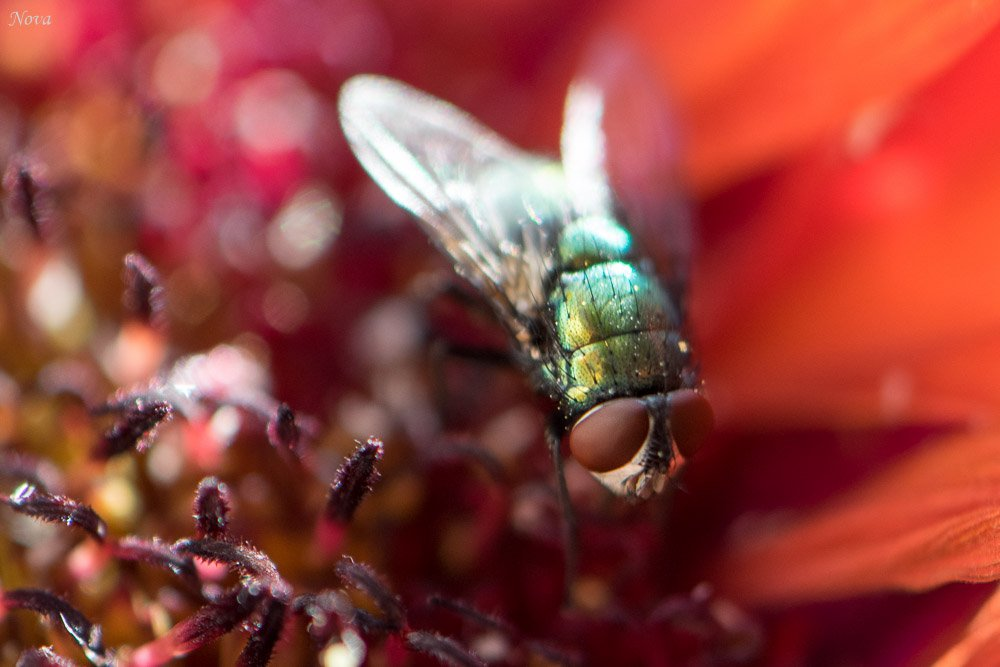 Fly and flower by novab