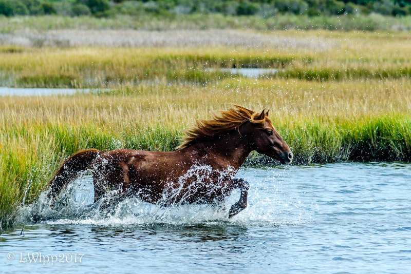 Run Like The Wind  by lesip