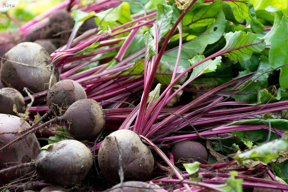 Beets by novab