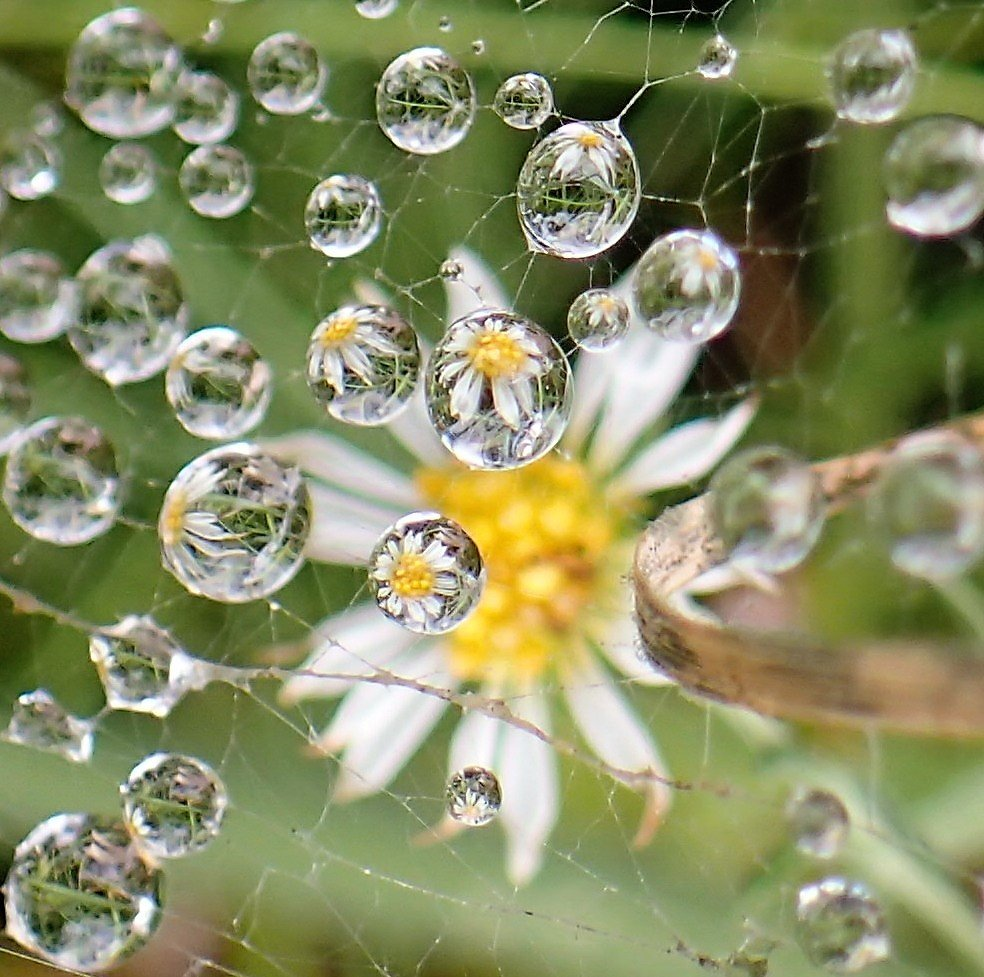 Dewdrops by cjwhite