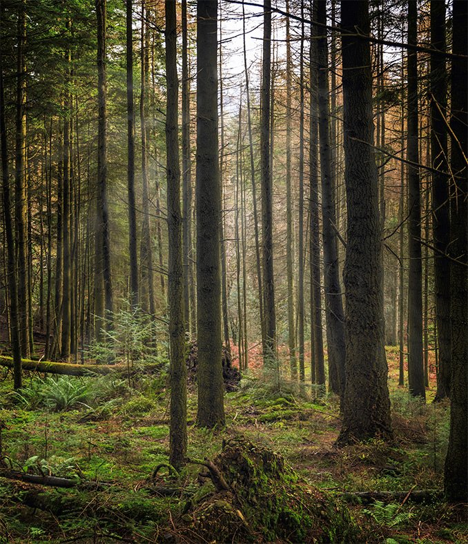 Grizedale Forest by ellida