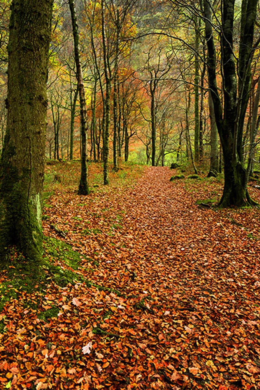 Woodland Walk by ellida