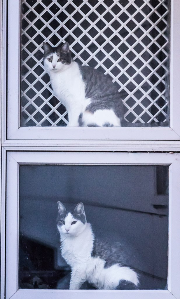window cats by aecasey