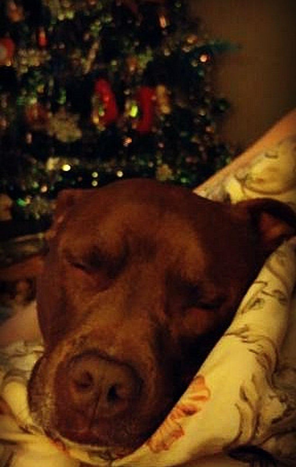 Sleepy Dog  by jo38