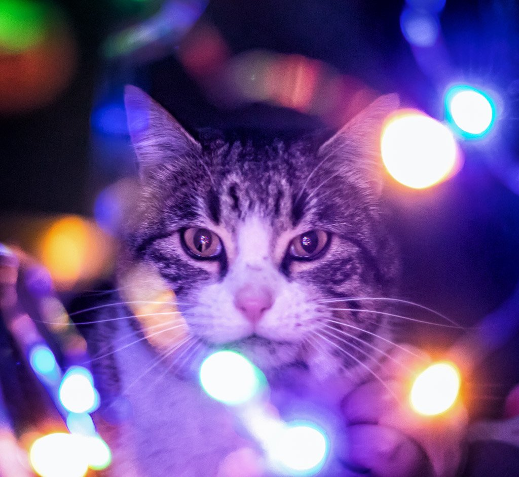bokeh cat by aecasey