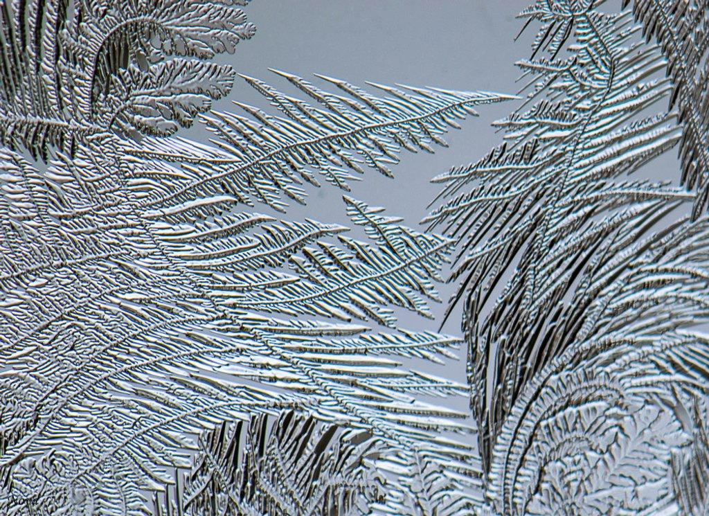 Window frost by novab