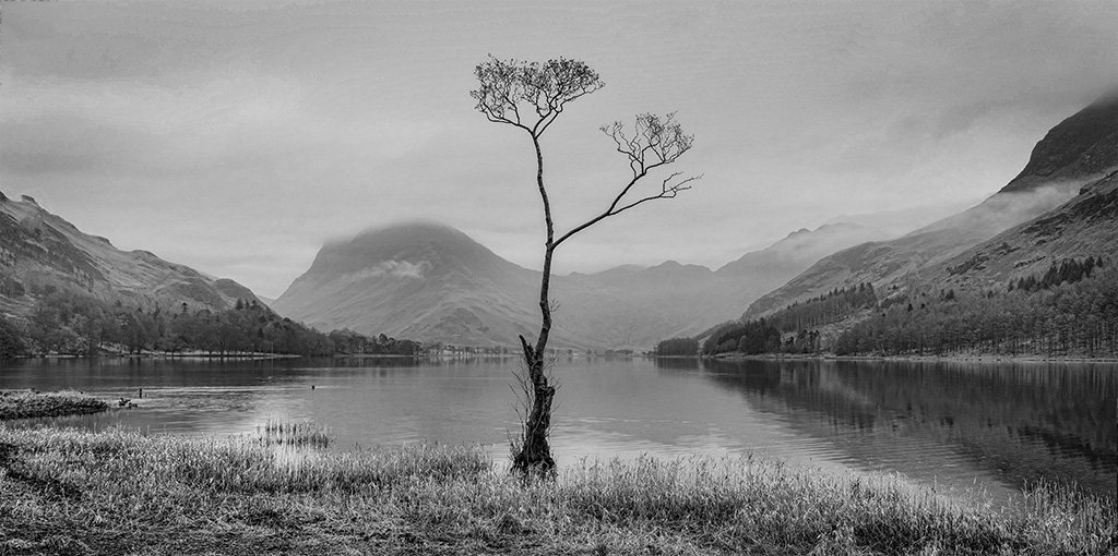 'The' Buttermere Tree by ellida