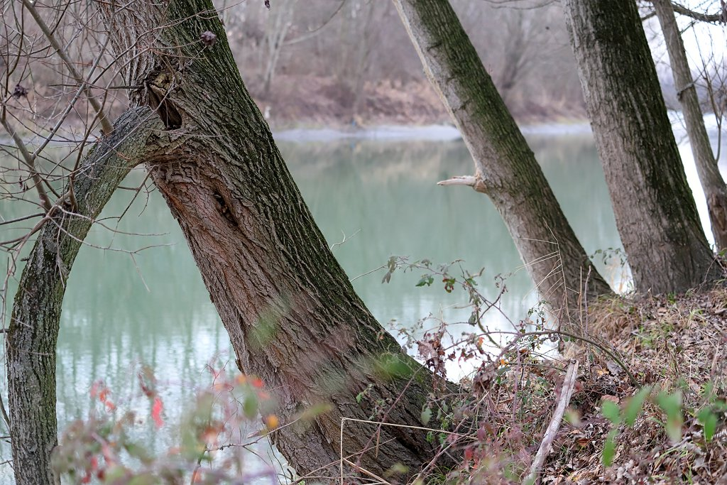 Trees along the river by spectrum