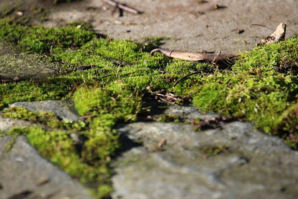 Moss Green by kimmer50
