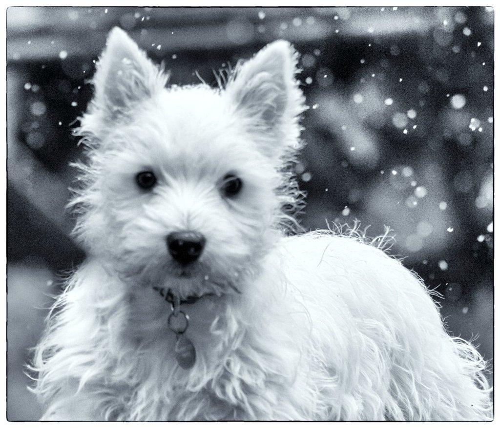 It's snowing George!! by pamknowler