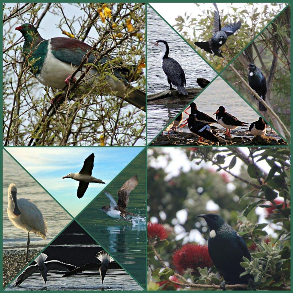 2017 NZ Birds by kiwinanna