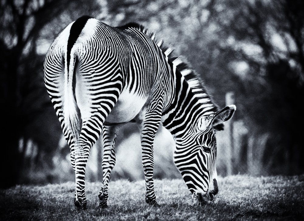 Stripes by pamknowler