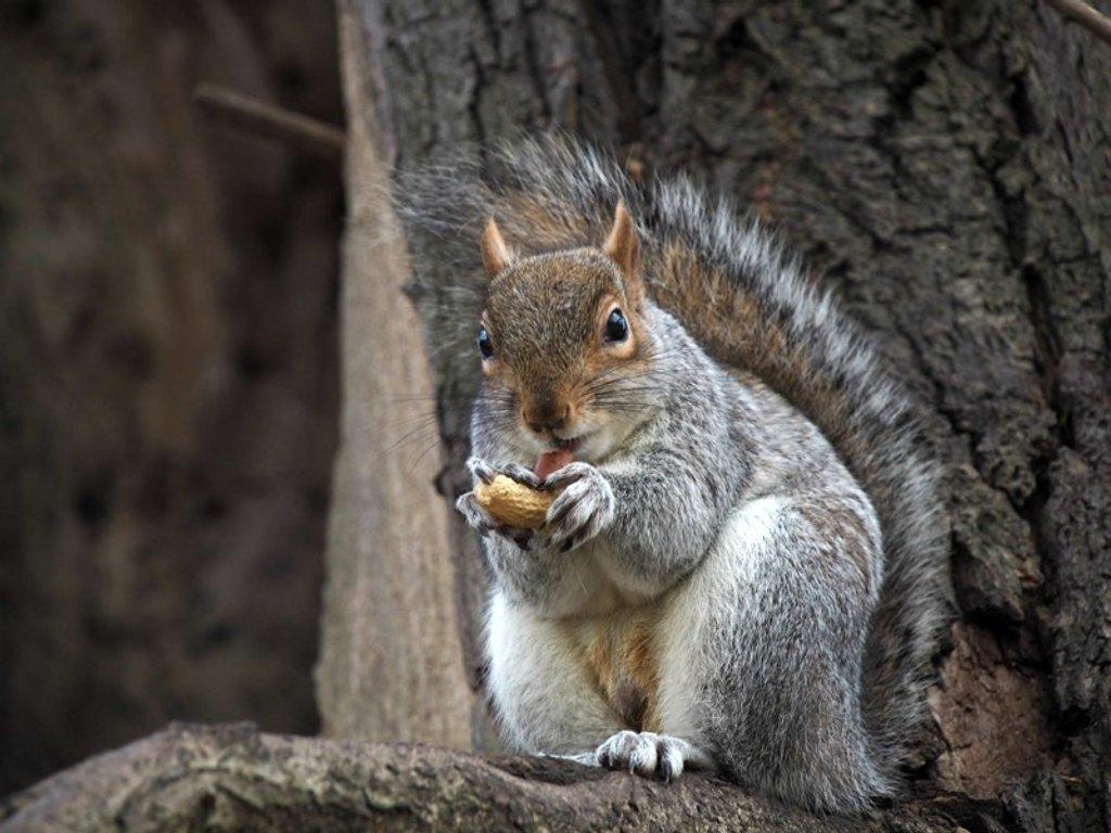 Squirrel Nutkin! by bizziebeeme