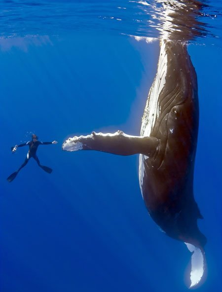 Whale by bruni