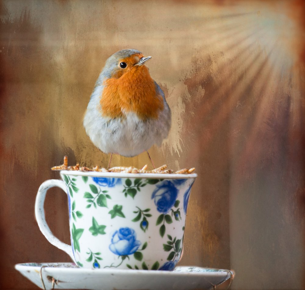 Breakfast Time!! by pamknowler