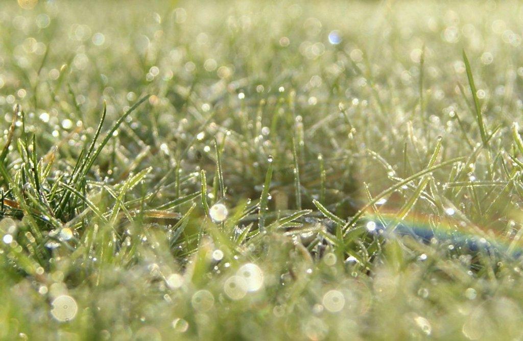 Dewkeh rainbow for helge by filsie65