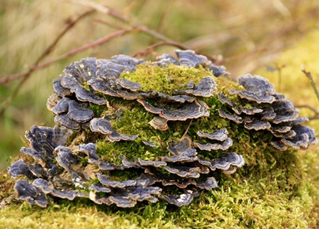 Fungi bush! by chris17