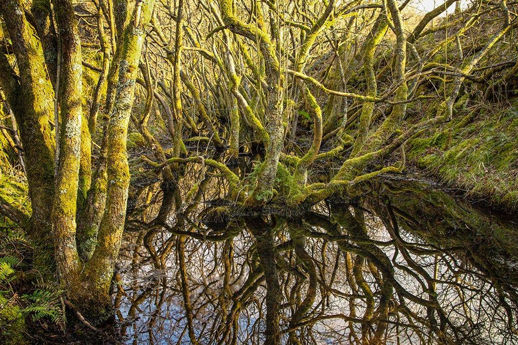 Swamplands by ellida